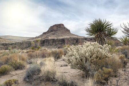 cholla: Cholla Cactus Garden in Mojave Desert, Hole in the wall tourist camp site Stock Photo