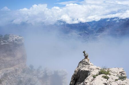 inversion: Temperature inversion turns Grand Canyon into a beautiful sea of fog, Grand Canyon Squirrel