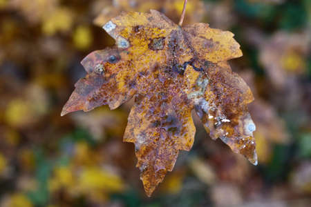 leaves in autumn time
