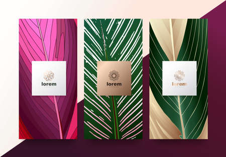 Vector set packaging templates Leaves of nature luxury or premium products.logo design with trendy linear style.voucher discount, flyer, brochure.menu book cover vector illustration.greeting card background.