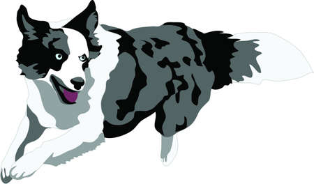 bordercollie: springen merle border collie Stock Illustratie
