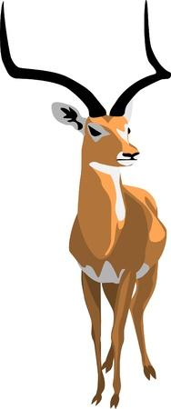herbivorous animals: grant gazelle