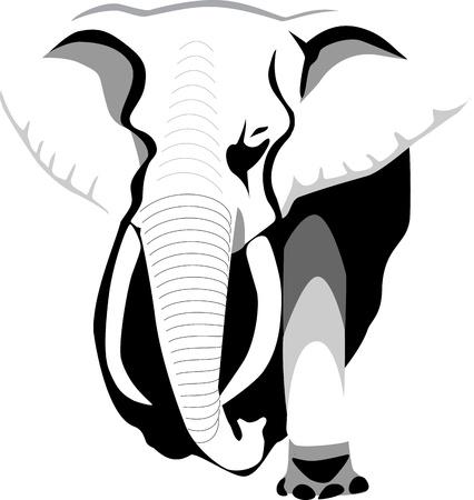elephant nose: elephant