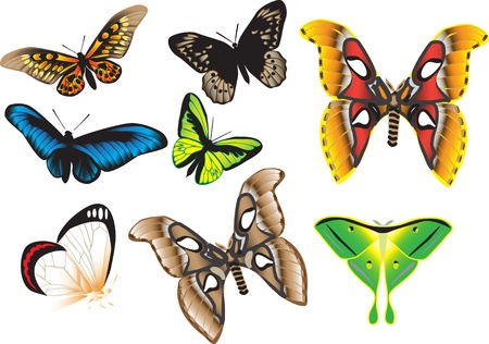 pollination: tropical butterflies Illustration