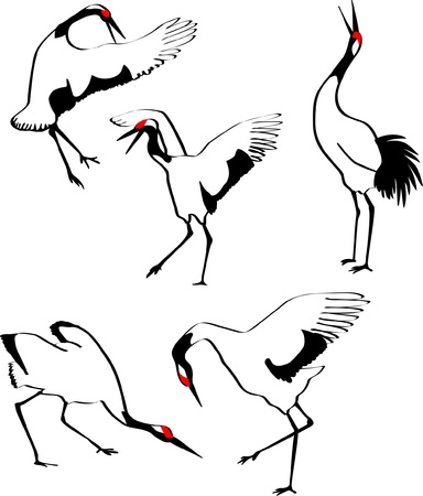 dancing japanese crane Stock Vector - 10594239