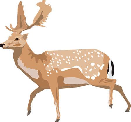 fallow deer Stock Vector - 10594242