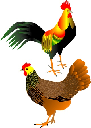hen and cock Stock Vector - 10594243