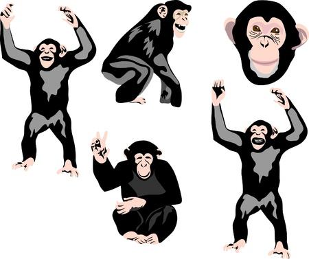 chimpanzees Illustration