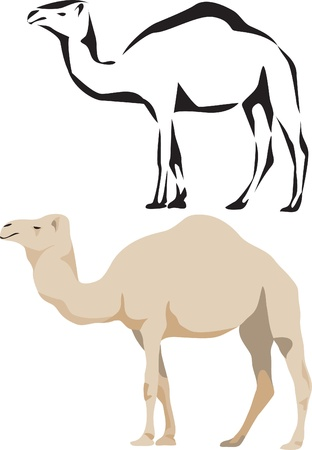 hump: logo dromedario Vettoriali