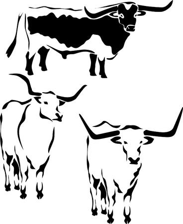 плоть: лонгхорн бык Иллюстрация