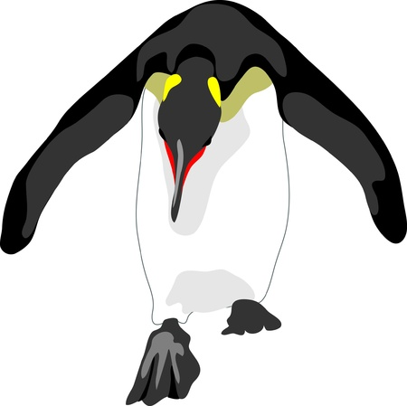 bowed penguin Illustration