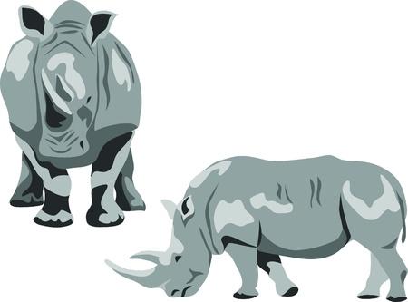 robust: rhinoceros