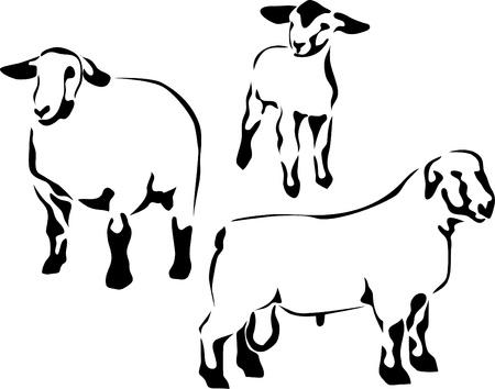 lamb: pecore suffolk