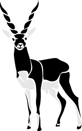 gazelle: black buck