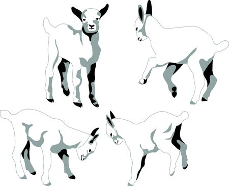 butt: young goats Illustration