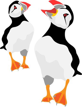 atlantic puffin Illustration