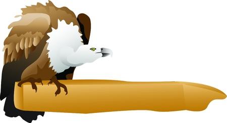 eurasian: Eurasian Griffin Vulture