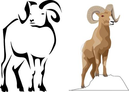 carnero: borrego cimarrón Vectores