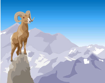 nevada: Bighorn Sheep Illustration