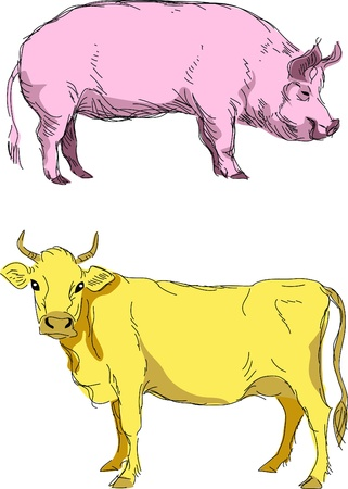 cow and pig Stock Vector - 10833616