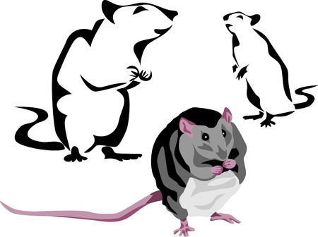 rodent: black rat Illustration
