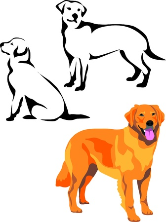 golden retriever Stock Vector - 10833615