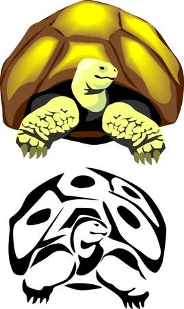herpetology: giant tortoise Illustration