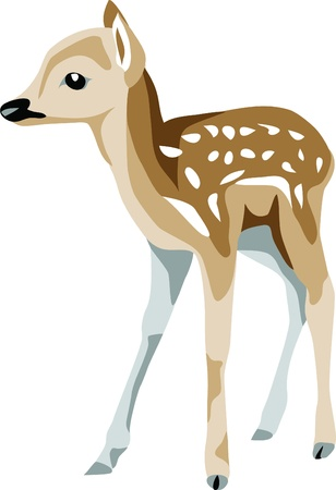 deer fawn Stock Vector - 10833623