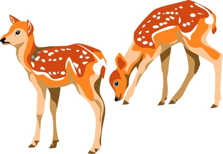 sika deer fawn Stock Vector - 10833629