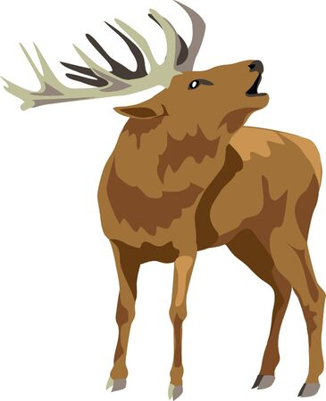 rut: grunting deer