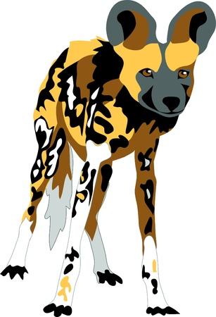 african wild dog - Lycaon pictus Vektoros illusztráció