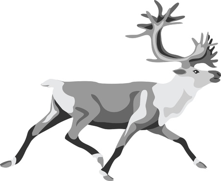caribou: running reindeer Illustration