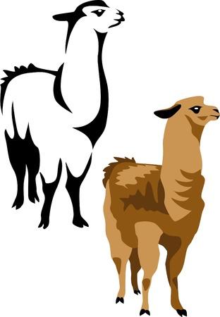 llama Illustration