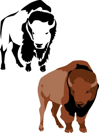 hoofed mammal: american bison Illustration