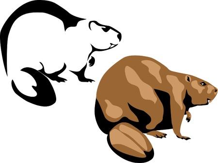 nibbling: beaver Illustration