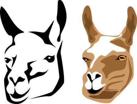llama: llama head Illustration