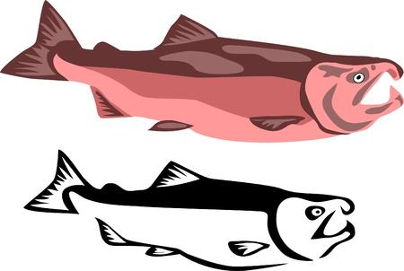 salmon fish Stock Vector - 13291824