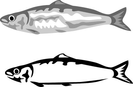 sardines: sardine