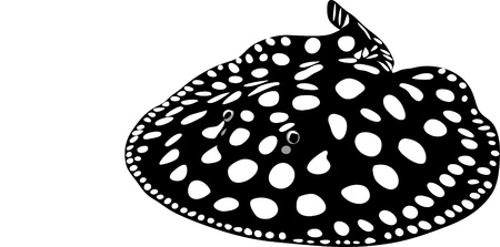 black diamond stingray Stock Vector - 13318726