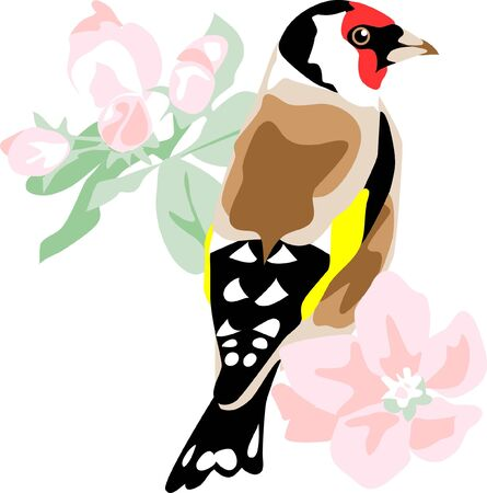 finch: european goldfinch with apple blossom
