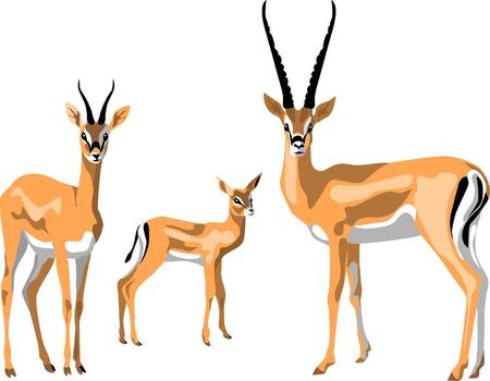 grant gazelle family
