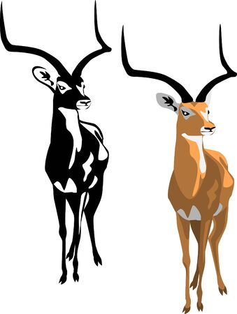 wildlife: impala Illustration