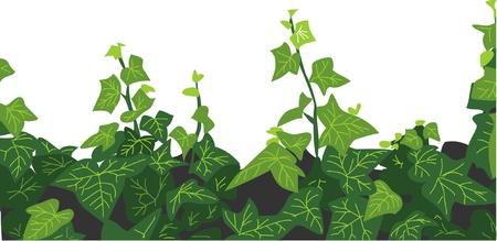 creeping: creeping ivy