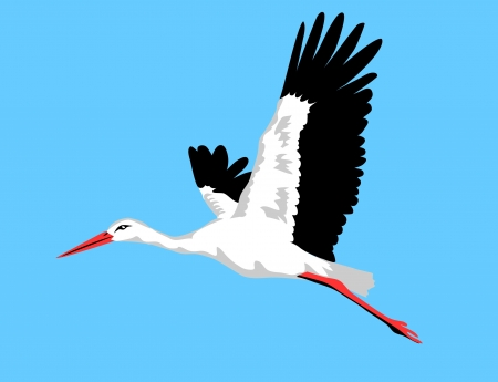 marsh: flying white stork
