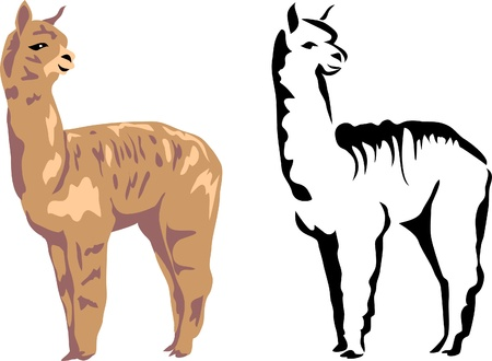 llama: llama alpaca Illustration