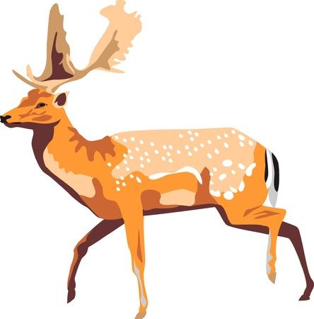 fallow deer: running fallow deer Illustration