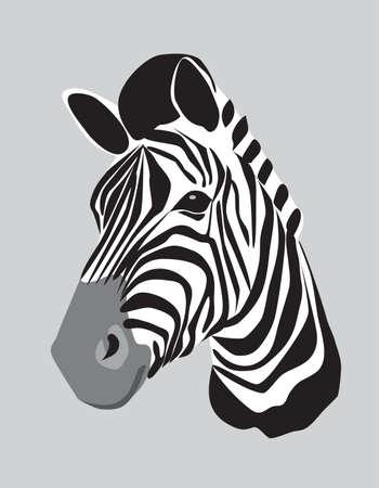 zebra heads: head of zebra