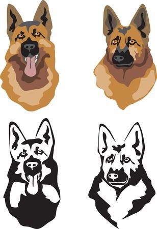 perro policia: cabeza de perro pastor alemán