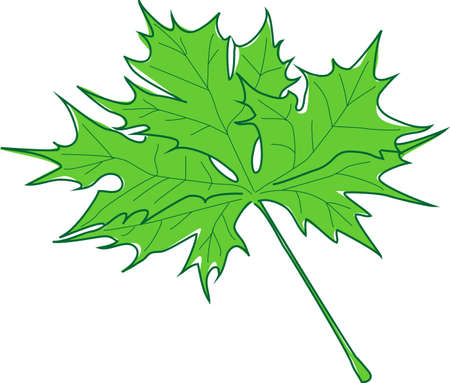 maple syrup: green maple leaf Illustration