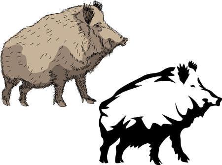 sow: wild boar logo Illustration